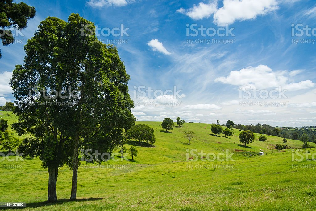Lush green rolling hills and trees in rural landscape stock photo