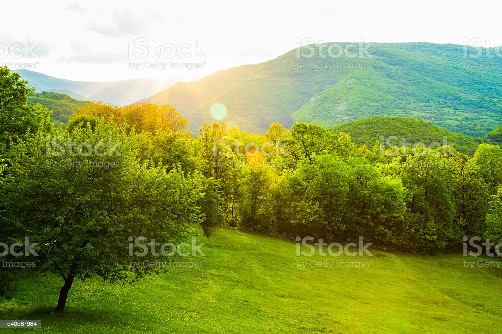 Lush green spring countryside with sun flare stock photo