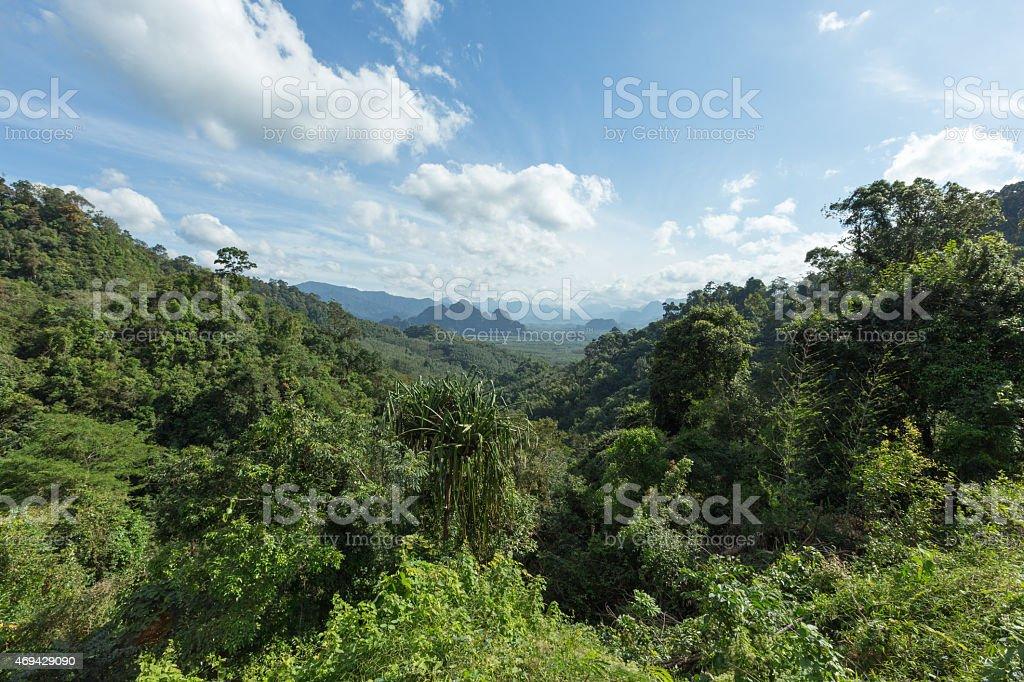 Üppig grünen tropischen Regenwald und Hügel im Khao Sok Lizenzfreies stock-foto