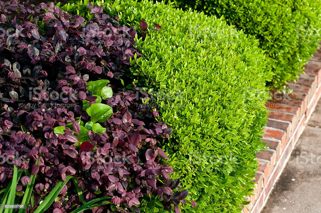 Lush landscaped flower bed. stock photo