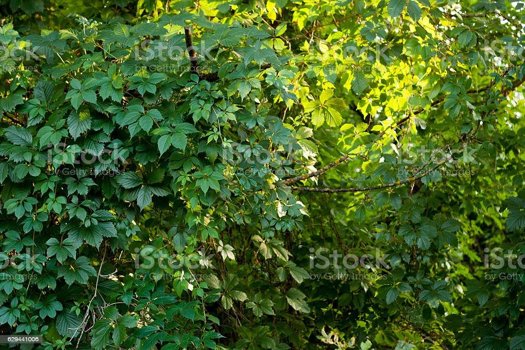 Lush leaves background stock photo