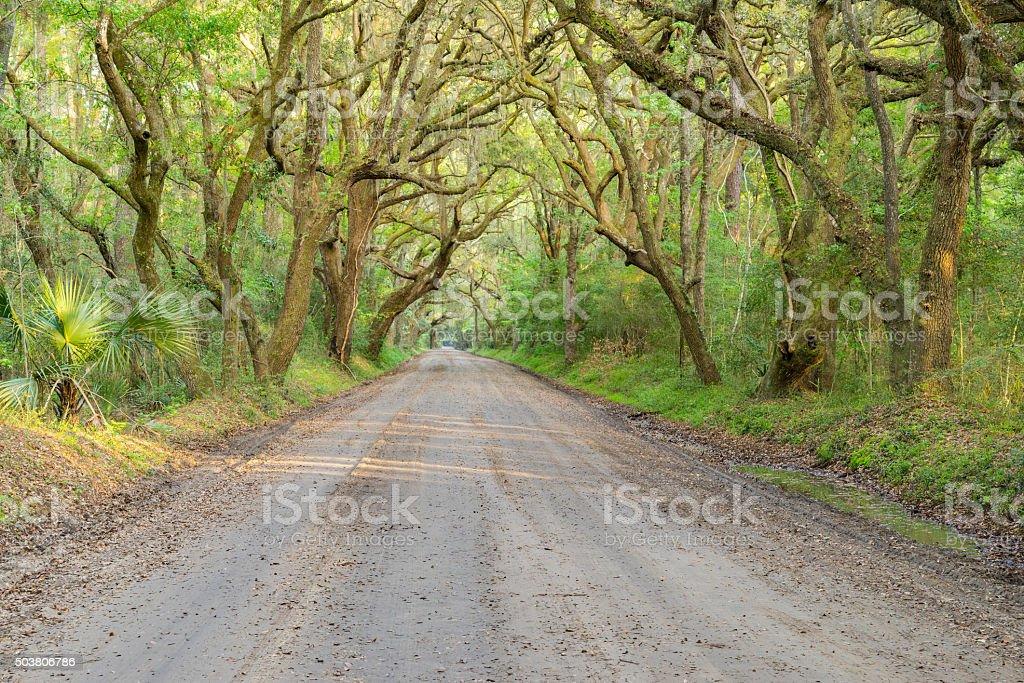 Lush Live Oak Canopy and Dirt Road near Charleston, SC. royalty-free stock photo