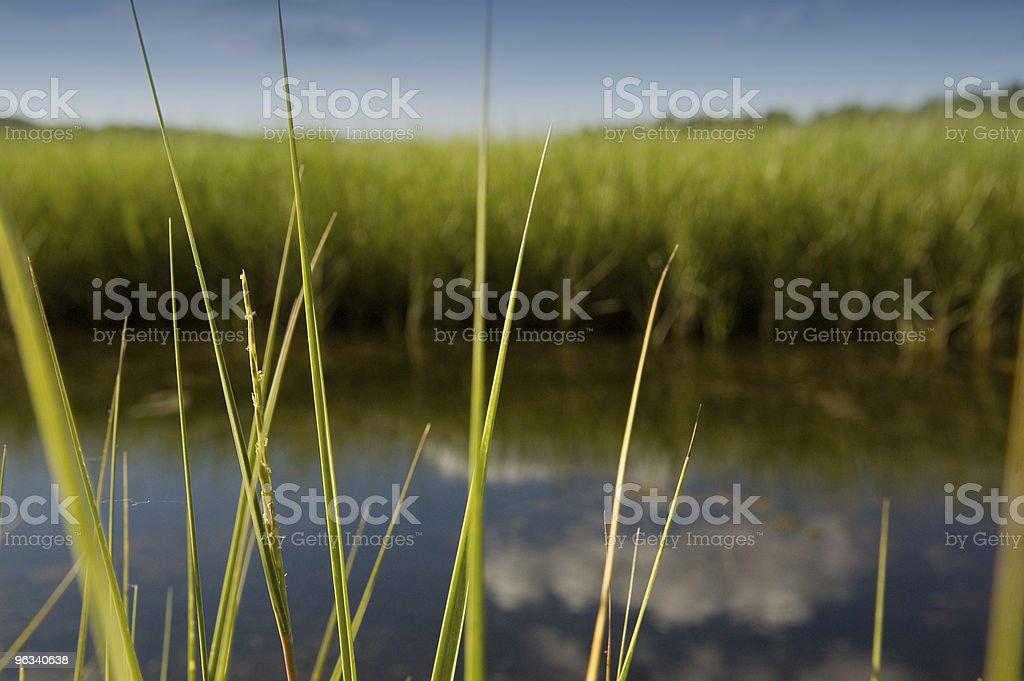 Lush Marsh royalty-free stock photo