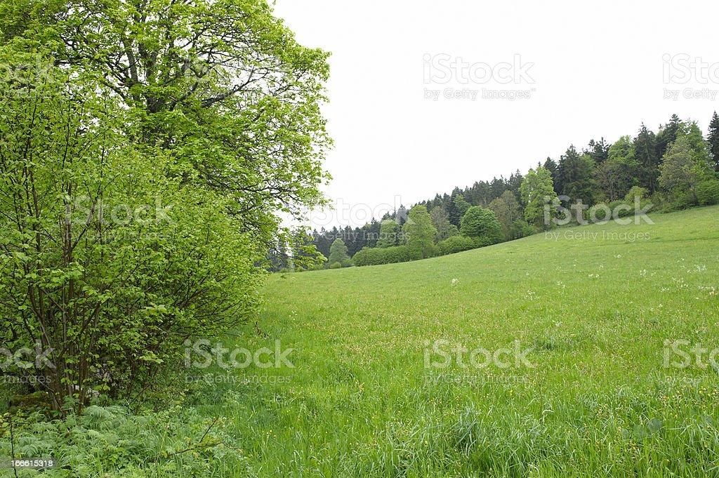 Lush Meadow stock photo