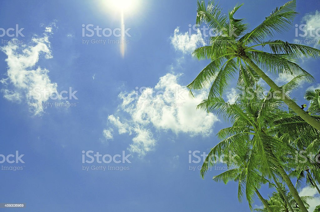 Lush palm trees with blue sky background stock photo