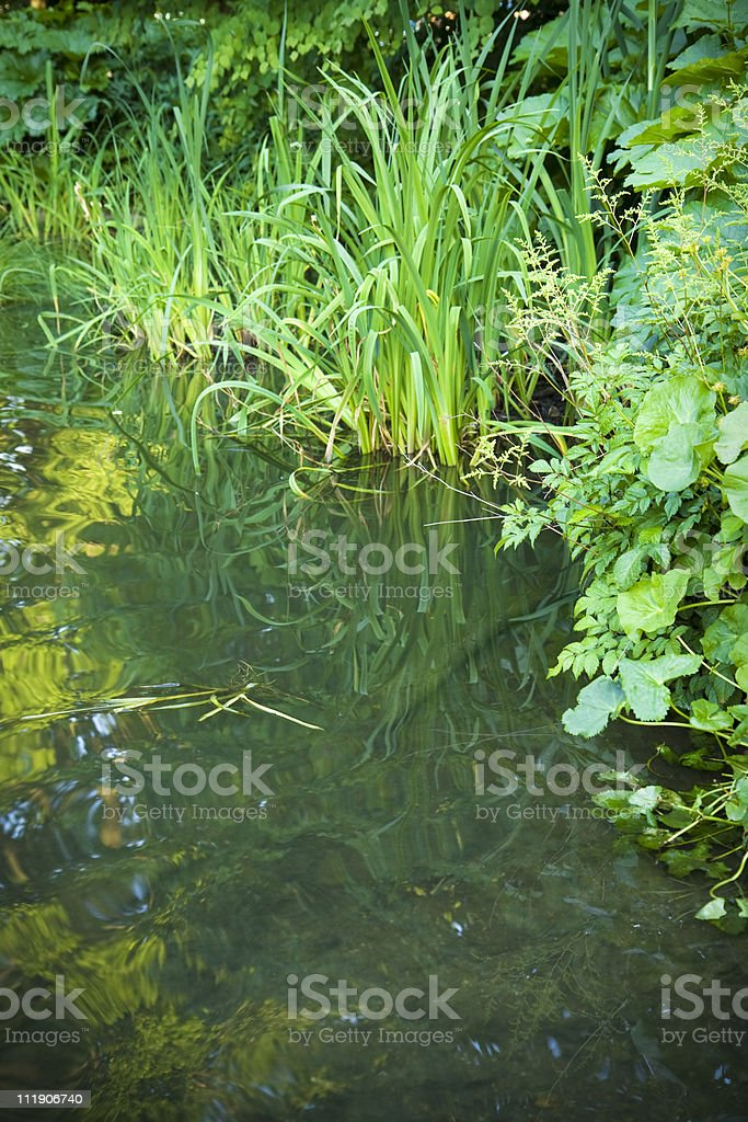 Lush peaceful pond royalty-free stock photo