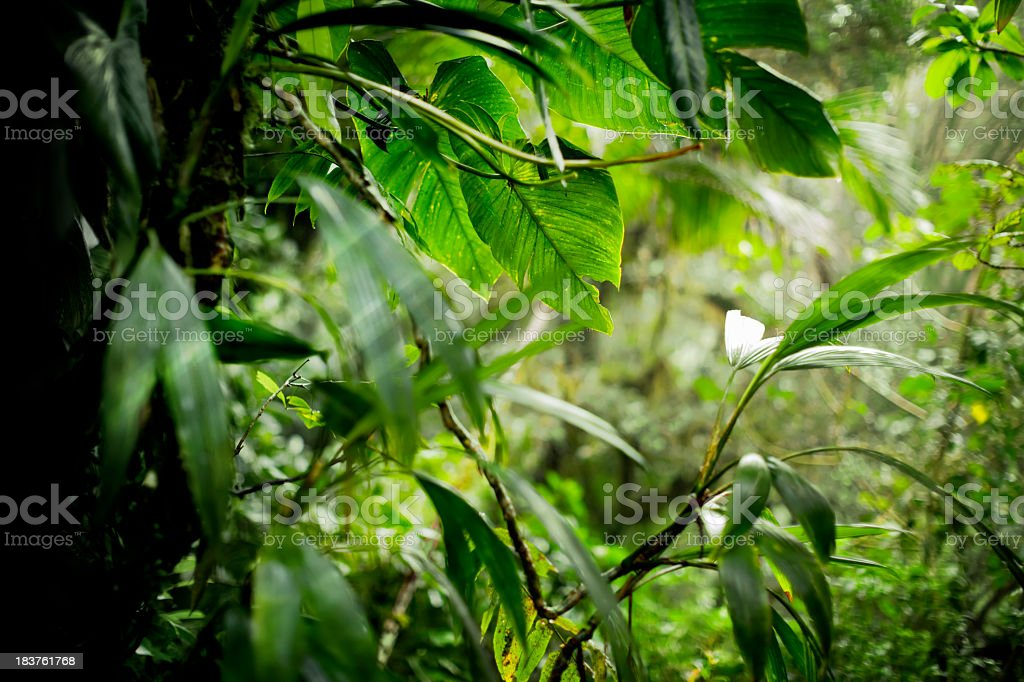 Lush Rainforest stock photo