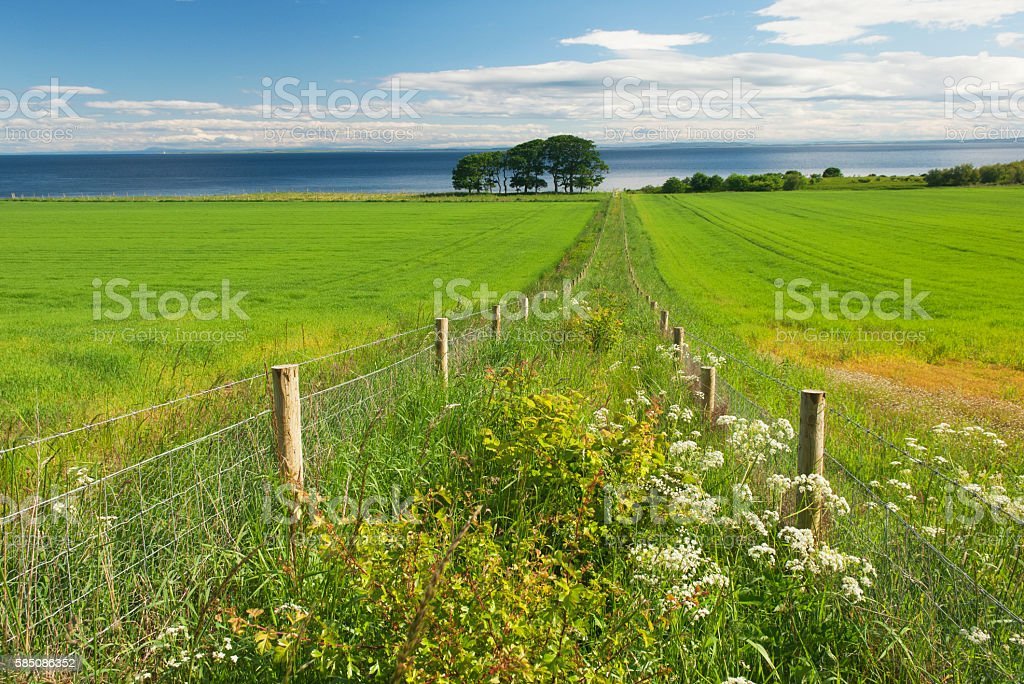 Lush summer farmland stock photo
