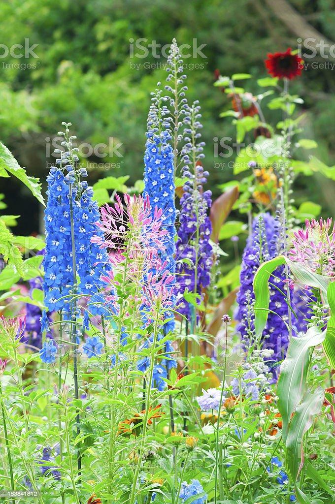 Lush summer flower garden - II stock photo