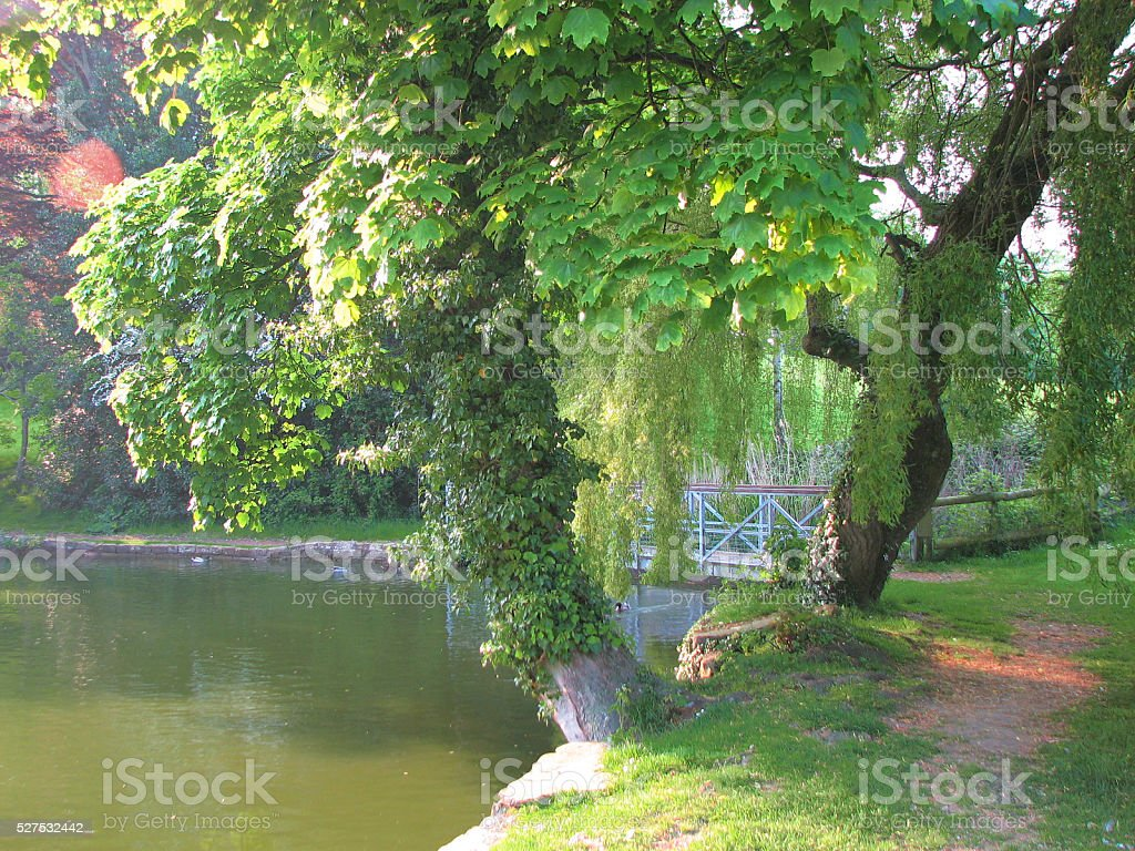 Lush Tree Overlooking Pond stock photo