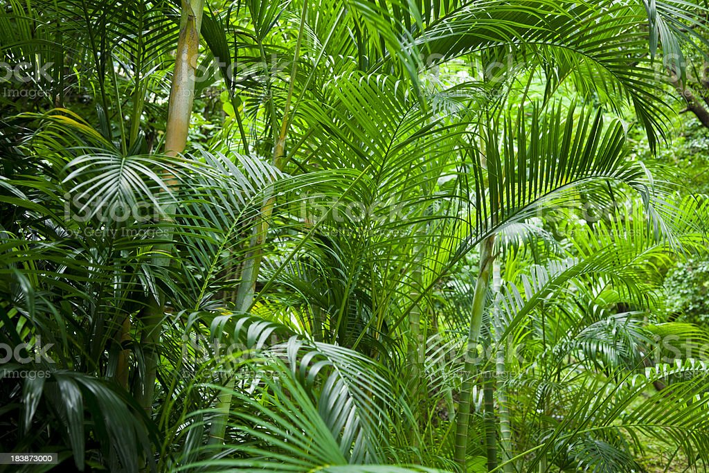 Lush tropical forest stock photo