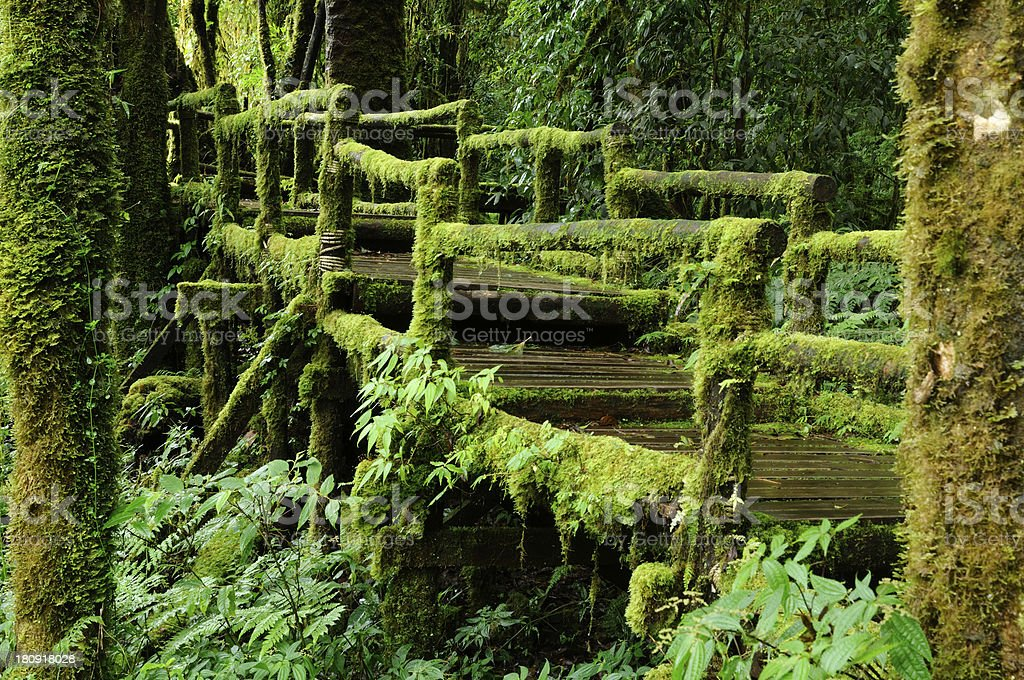 Lush tropical rainforest. stock photo