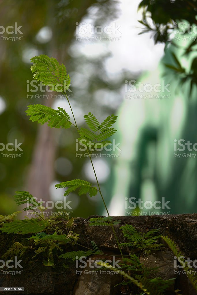 Lush under trees in woodland forest stock photo