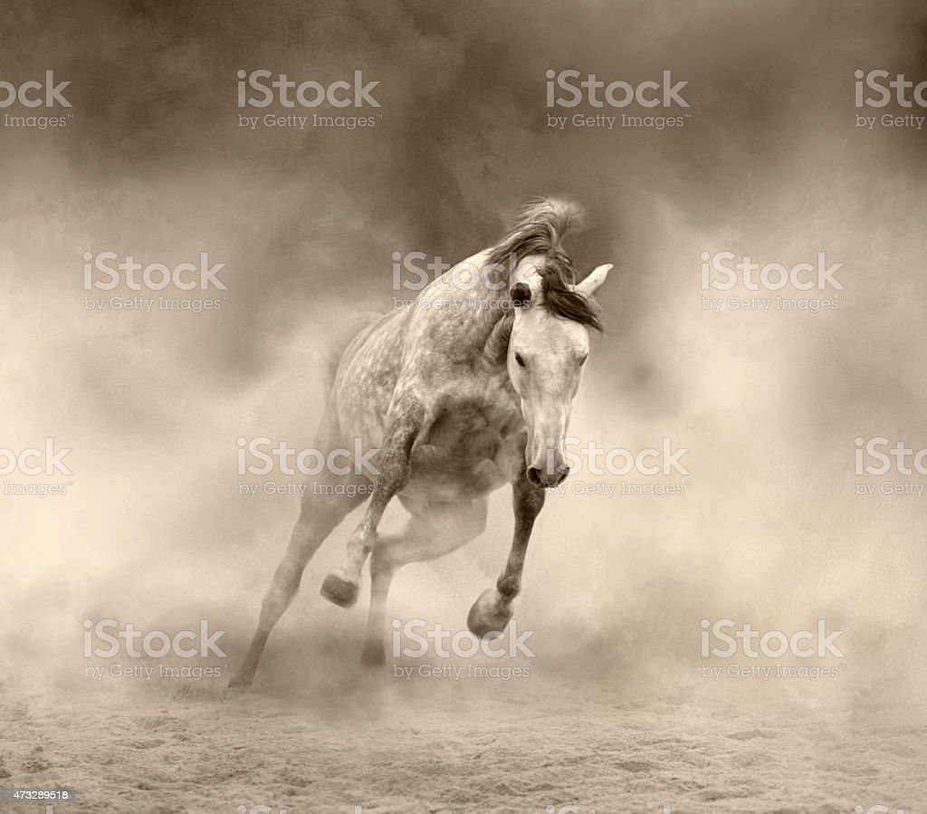 Lusitanian horse stock photo