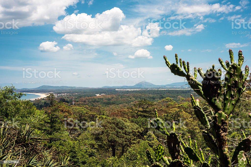 Lussich Botanical Park and Solana Beach, Punta del Este stock photo