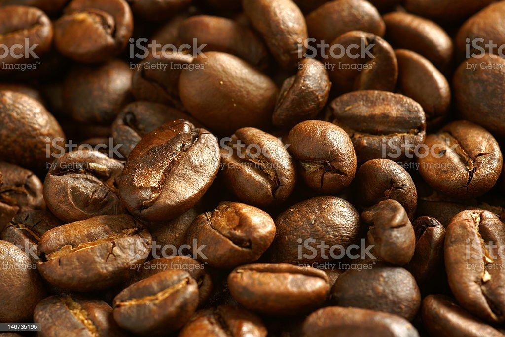 luwak coffee bean royalty-free stock photo