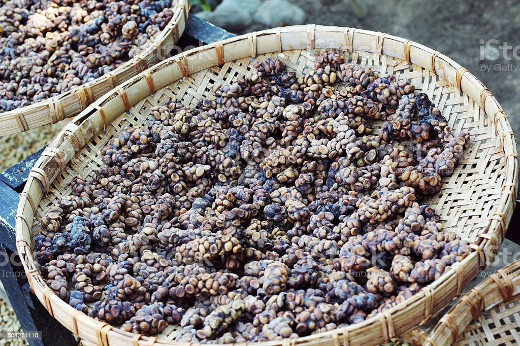 luwak coffee bean stock photo