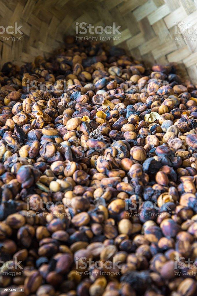 Kopi Luwak Beans stock photo