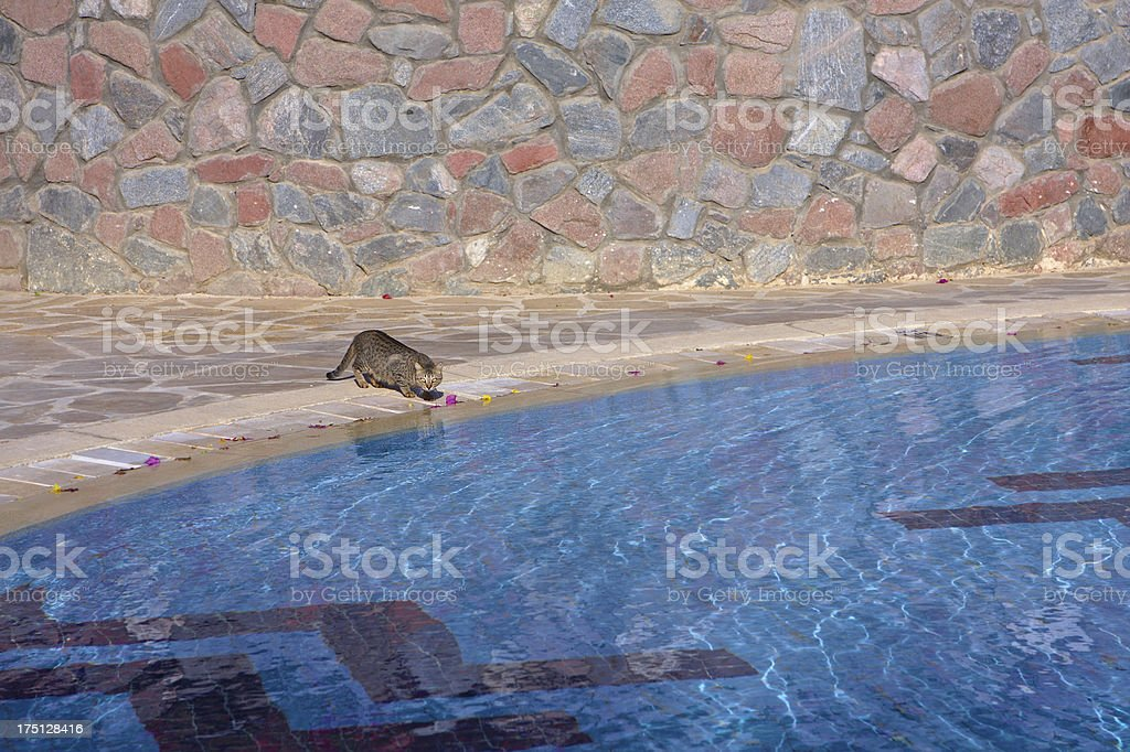Luxury hotel swimming pool in the morning royalty-free stock photo