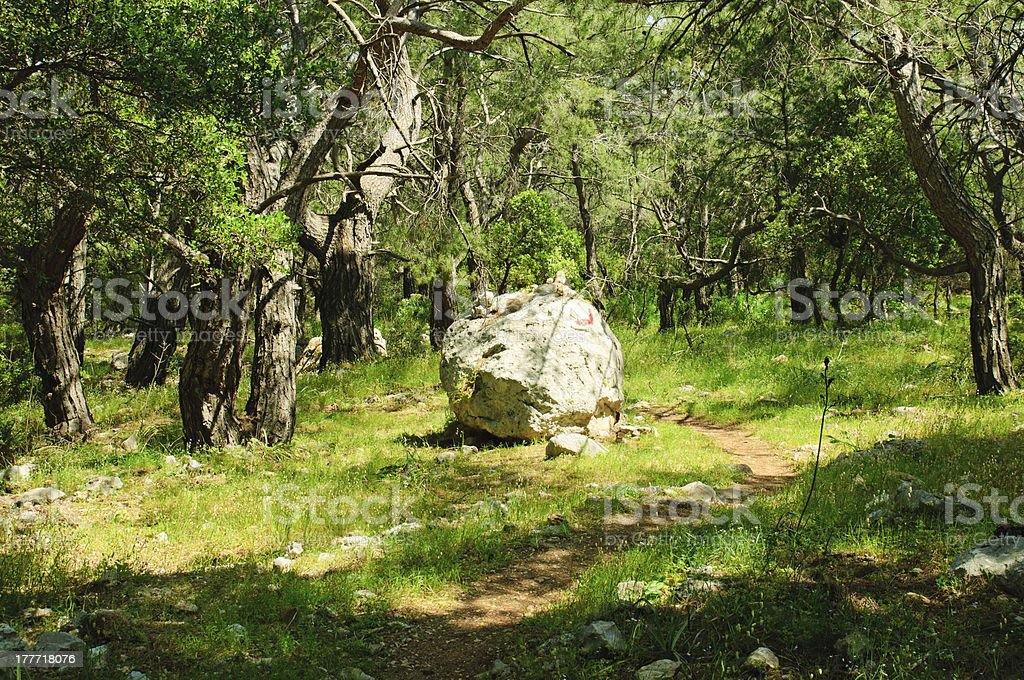 Lycian trail in forest stock photo