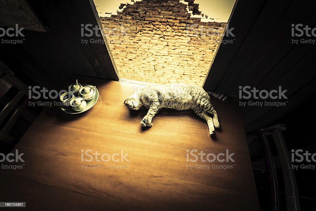 Lying cat on a table royalty-free stock photo