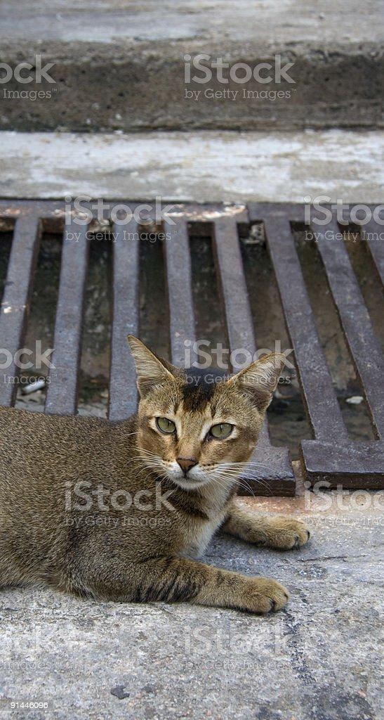 Funeral de Cat foto de stock libre de derechos