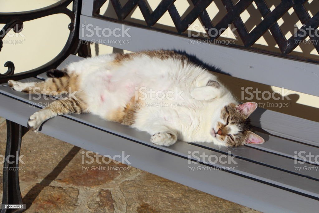 Lying down tabby cat on a bench stock photo