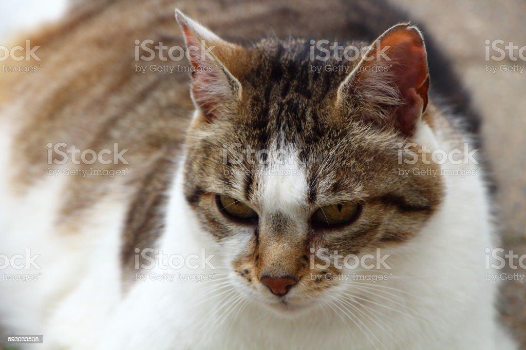 Lying down tabby cat stock photo