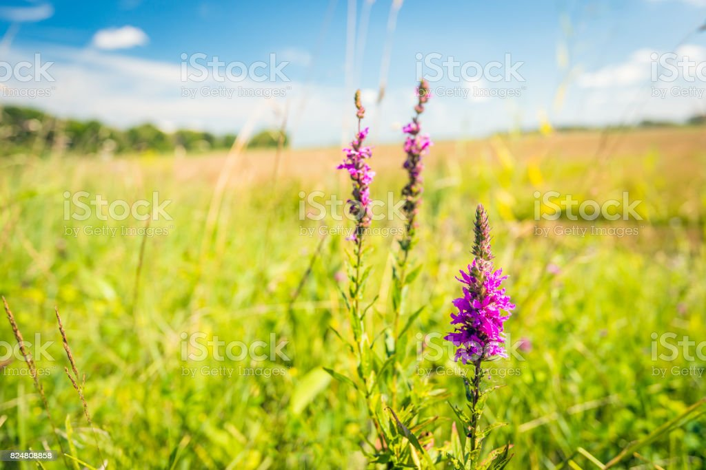 Lying in the grass and enjoying nature stock photo