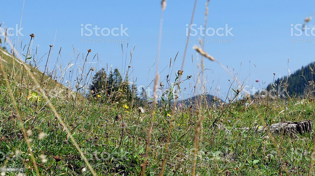 Lying in the mountain pasture stock photo