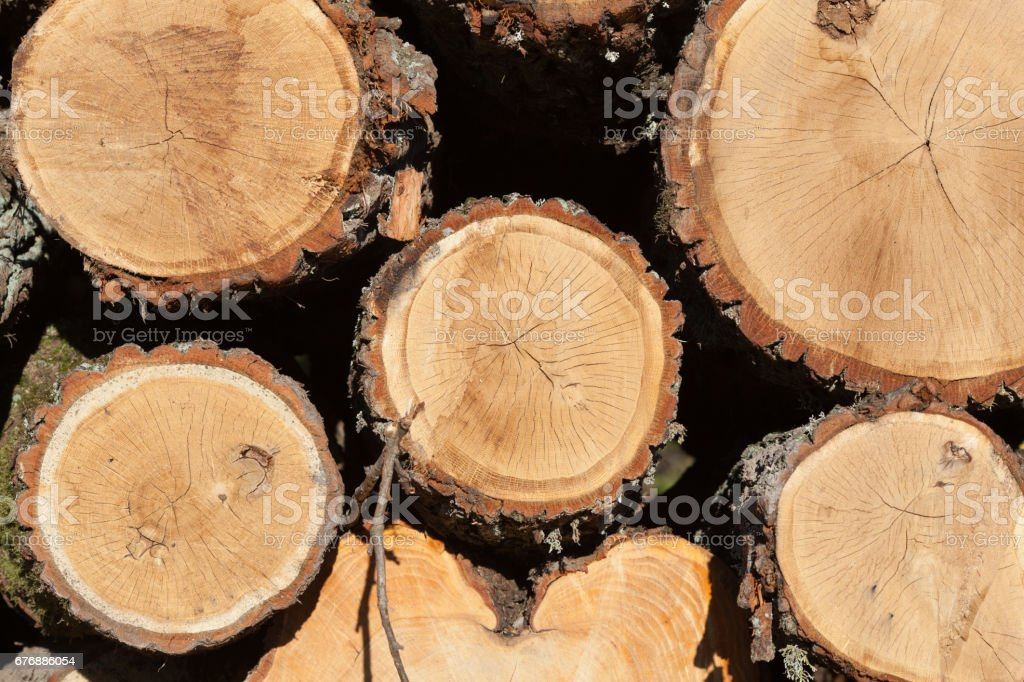 Lying near the road are freshly felled trees. stock photo