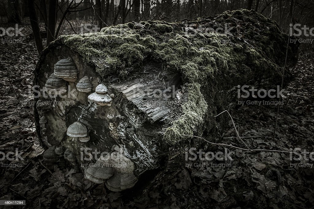 Lying tree trunk stock photo