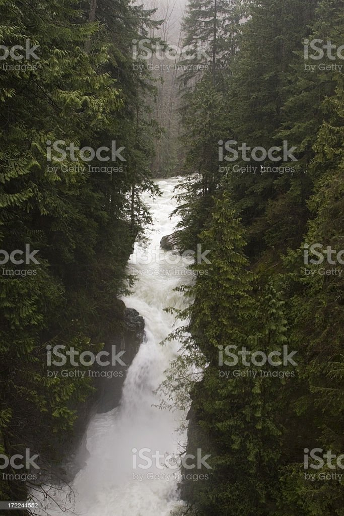 Lynn Canyon. British Columbia stock photo