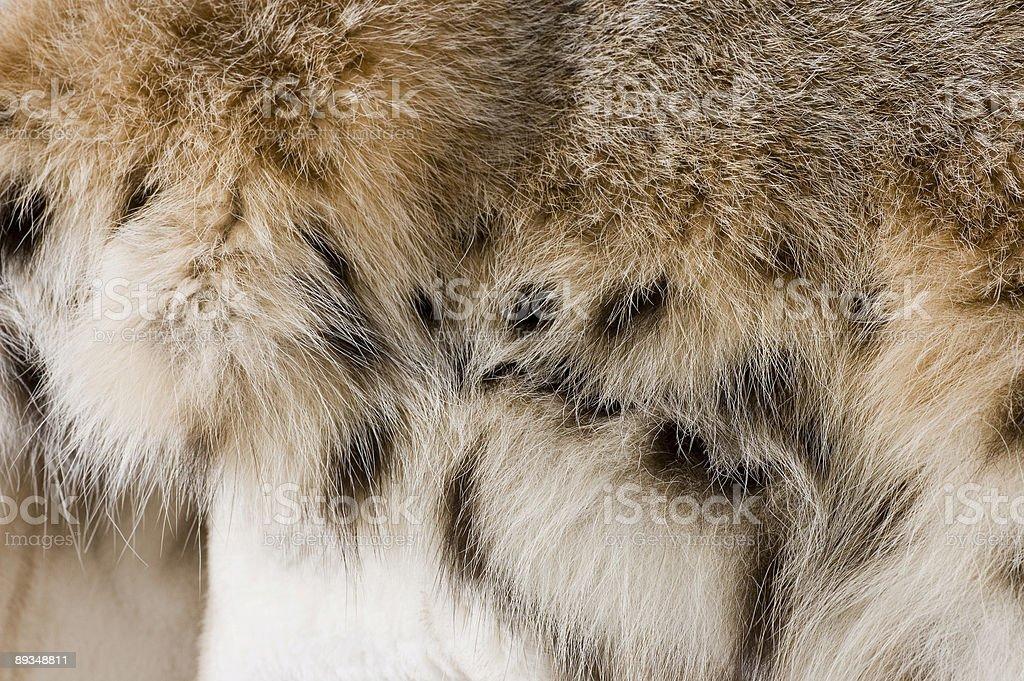 Lynx fur royalty-free stock photo
