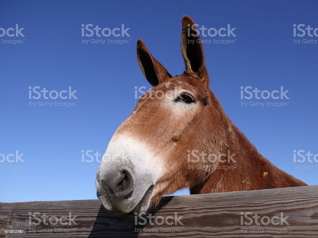 I'm all ears royalty-free stock photo