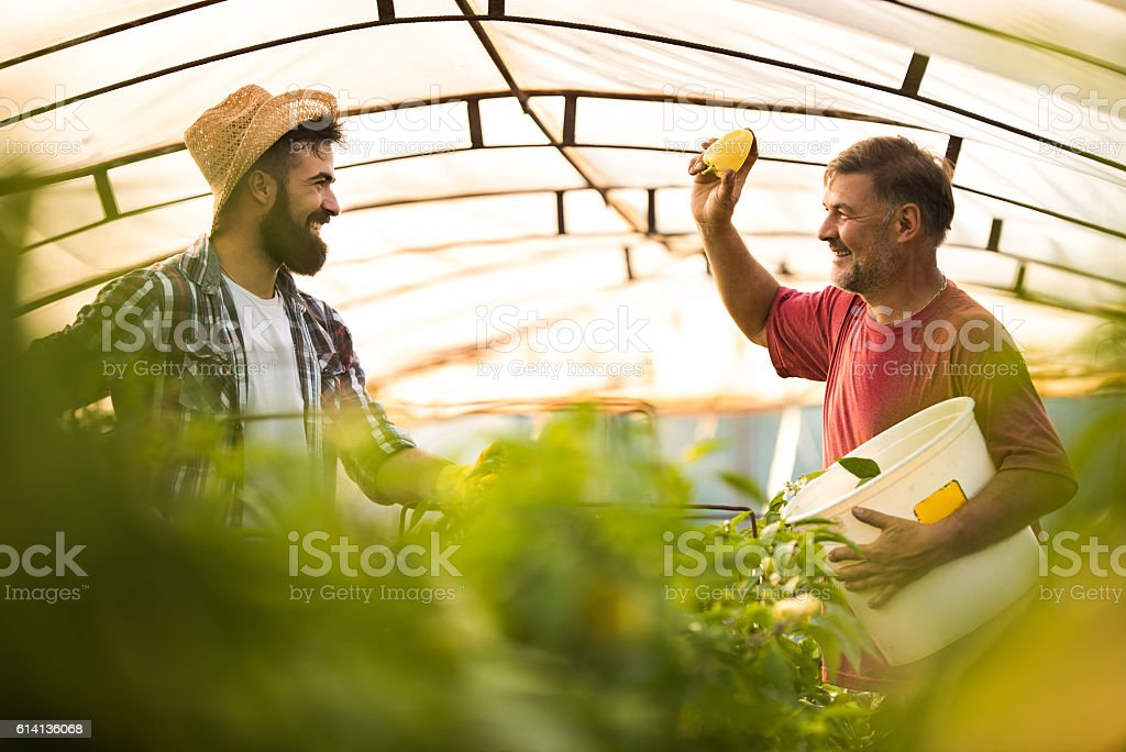 I'm going to throw this pepper on you! stock photo