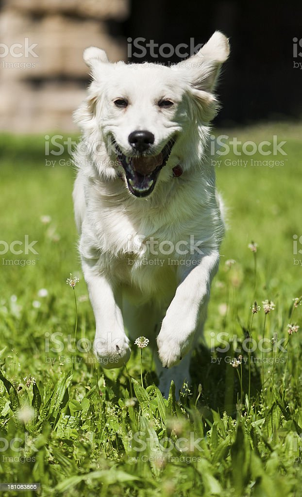 I'm happy and I know it royalty-free stock photo