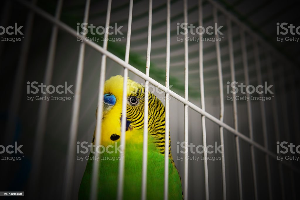 I'm looking forward to freedom! stock photo