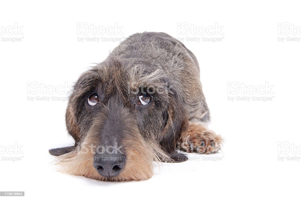 I'm sorry! stock photo