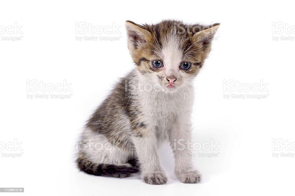 I`m Very Veeeery Lonley Cat royalty-free stock photo