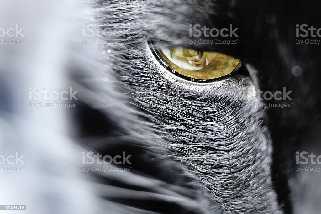 I'm watching you royalty-free stock photo