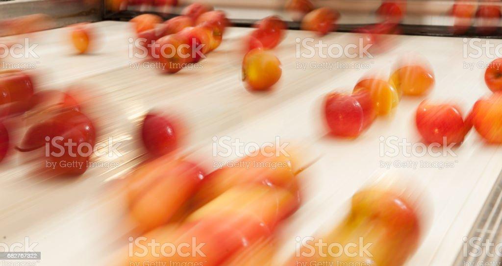 Maças - Processo de Classificação stock photo