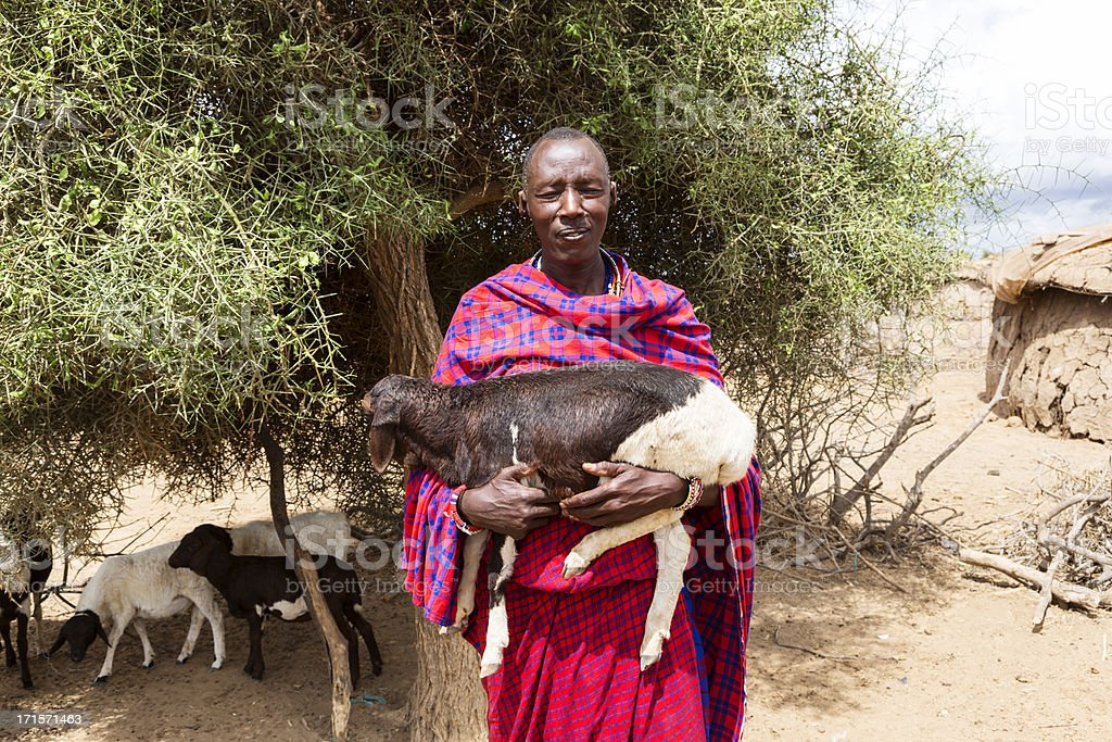 Maasai man with sheep in his arms. stock photo