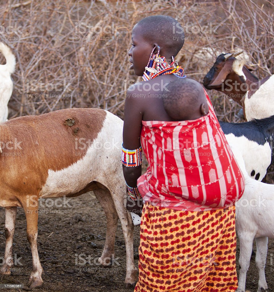 Maasai mother with baby on back milking goat stock photo