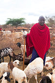 Maasai with his goats in the village, Kenya.