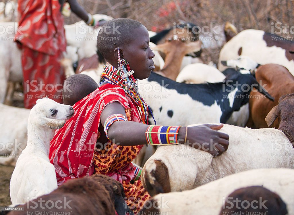 Maasai woman with baby on back and goats. stock photo