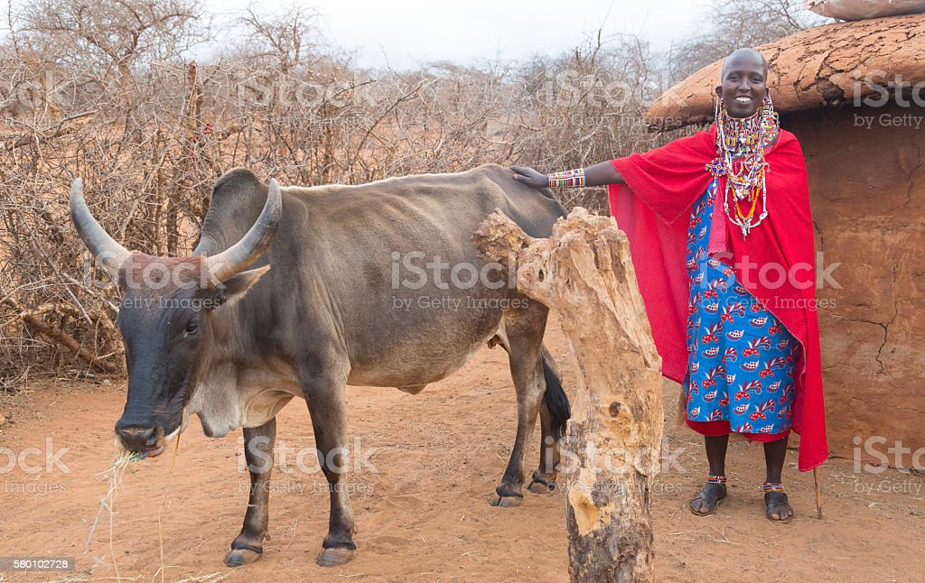 Maasai woman with Zebu cow in village, Kenya, East Africa. stock photo