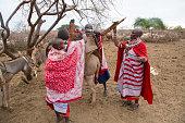 Maasai women and donkeys getting ready to move village. Kenya.