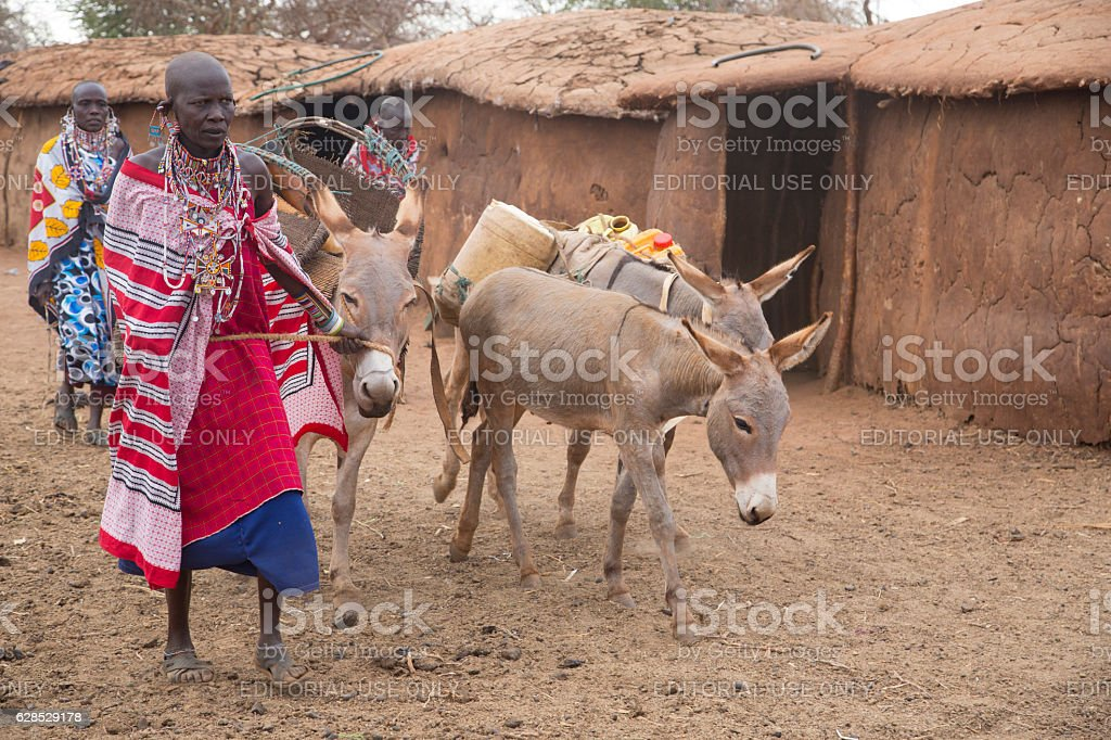 Maasai women and donkeys getting ready to move village. Kenya. stock photo