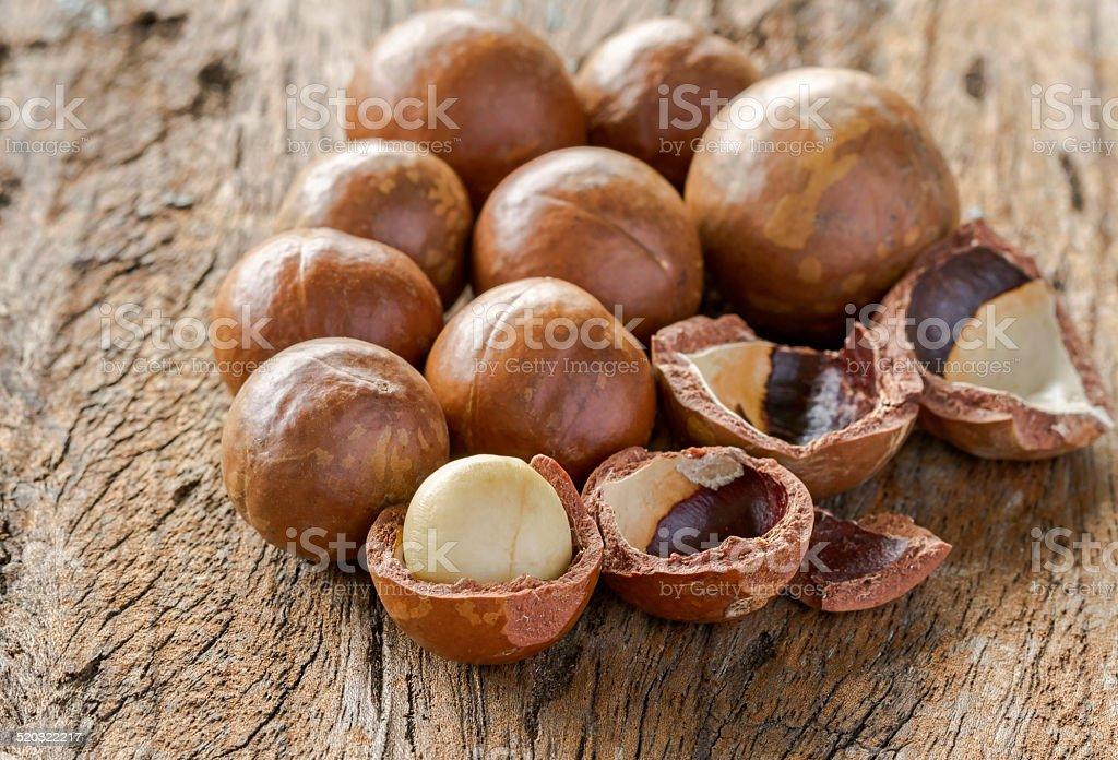 Macadamia in shell stock photo
